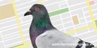 Thuật toán chim bồ câu - Google Pigeon